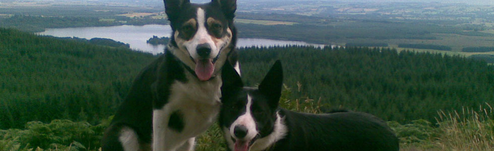 We welcome pets at Lomond View Cottage